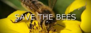 http://www.avaaz.org/en/save_the_bees/?fpbr